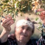 The Olive Tree is Surely the Richest Gift of Heaven