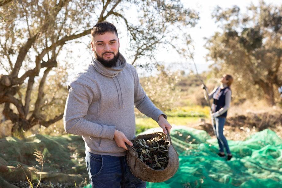Olive Oil Tree - ALO Magazine