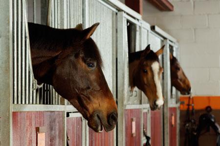 Equestrian at Coworth Park - ALO Magazine