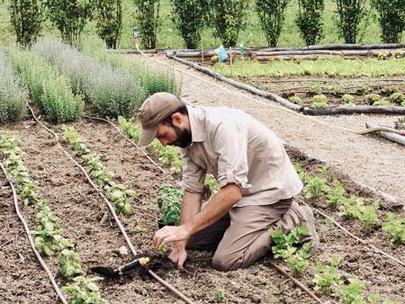 ilsalviatino gardening- ALO Magazine