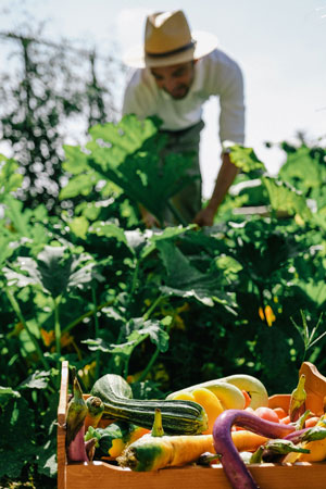 RWCdB Kitchen Garden - ALO Magazine