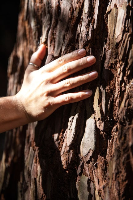 hand on tree canyon ranch woodside - ALO Magazine